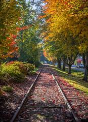 Issaquah Railroad Tracks (s.d.sea) Tags: train tracks railroad railway trains fall autumn issaquah washington washingtonstate wa pnw pacificnorthwest pentax k5iis 2470mm foliage perspective leading lines