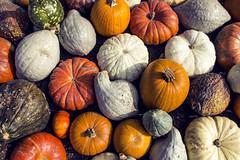 Pumpkin bonanza (susy.drake) Tags: ifttt 500px pumpkin autumn still life fal vegetables