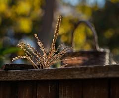 Corn Tassle and Basket (channel locks) Tags: corn olympusomdem1mkll fence mzuiko75mmf18