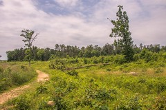 Unfinished Railroad Towards Brawners Farm (www78) Tags: manassas national battlefield park virginia unfinished railroad towards brawners farm second bull run american civil war