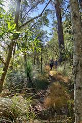Bushwalking with Flickr friends Netty and Pombat (Tatters ✾) Tags: australia queensland mainrangenationalpark bushwalking bushwalkers people path ridge hikers forest