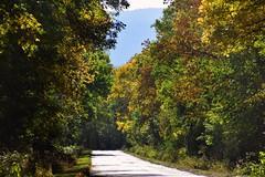 colours of autumn (JoannaRB2009) Tags: autumn fall colours sunny path road nature sudety lowersilesia dolnyśląsk polska poland trees