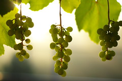 Three (Baubec Izzet) Tags: baubecizzet pentax fruit grapes summer light