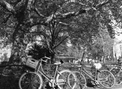There's room for us all (Arne Kuilman) Tags: planes platanen leidsebosje amsterdam nederland netherlands arsimago320 imago320 iso320 film 645 mediumformat rodinal homedeveloped 8mins19c mamiyasekor55mmf28 trees bomen plane plataan platanushispanica square bicycles