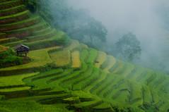 Mù Cang Chải 2015 (trieu_van_194) Tags: vietnam vietnamlandscape travel traveling traveler travelphoto fog