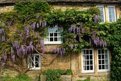 Castle Combe Cottage - Wiltshire (JauntyJane) Tags: wisteria castlecombe wiltshire cottage warhorse