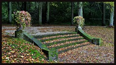 Autumn stairs    explored 10-10-2018 (Roel Oortwijn) Tags: herfst autumn scheybeeck park leafs bladeren trees bomen tree grass soil forest wood explore explored inexplore