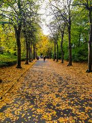 Autumn in Dublin (McGaggs) Tags: autumn leaves park dublin ireland green brown walk path city trees nature urban