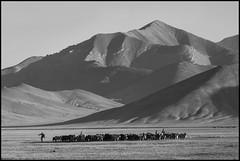 (Cheumou Phildroso) Tags: rangkul tadjikistan montagne troupeau enfant cattle mountain