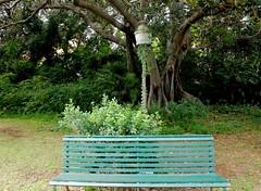 Villa Malfitano - Palermo (dona(bluesea)) Tags: alberi trees lampione streetlamp panchina bench villamalfitano palermo sicilia sicily