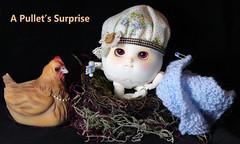 It's a boy! (bentwhisker) Tags: doll bjd resin anthro egg hen chicken soom neoangelregion humptydumpty pullet aimerai bellinathehen 2769