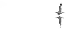 Möwe (IIIfbIII) Tags: seagulls möwe lake see minimal monochrome minimalism white blackandwhite bird bw blackwhite schwarzweiss weis canon art fineart nature naturephotography naturfotografie nationalpark natur wildlife wildlifephotography wild water wasser reflexion spiegelung mv müritznationalpark havel mecklenburgvorpommern