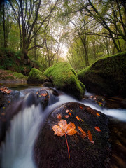 Golitha Fallen (Timothy Gilbert) Tags: autumn naturereserve wideangle woods ultrawide lumix laowacompactdreamer75mmf20 boulders rocks woodland leaves riverfowey leaf waterfall river m43 microfourthirds water microfournerds sunrise golithafalls gx8 panasonic cornwall