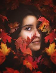 leaves eves
