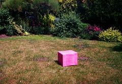 Big pink box in the garden (joanna.smieja) Tags: pink box garden gift present plants wrocław analog analogue film canonetql19 superia ishootfilm joannasmieja smieja