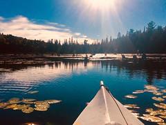 Deer Bay Kayaking (danfryer2) Tags: iphonephotography iphone digitalphotography nature water deerbay