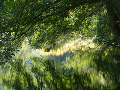 Spiegelung - Kleine Wanderung im Albtal (Nordschwarzwald) (thobern1) Tags: alb albtal etzenrot neurod marxzell nordschwarzwald schwarzwald blackforest foretnoir wanderung