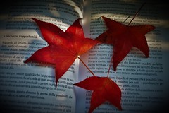 Concedersi l'opportunità (ornella sartore) Tags: libro parole foglie colori autunno allaperto particolari luce ombra