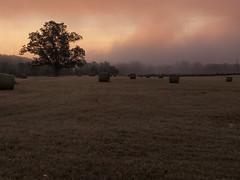 CRW_2151 (David J. Thomas) Tags: bethesda arkansas whiteriver clouds fog farms fields roads dawn sunrise morning