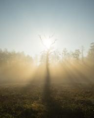 Bosch (19 of 32) (VarsAbove) Tags: kampinos kpn kampinoski park narodowy fog mist mgła morning sunrise dawn wschód polska poland łoś moose sony sonya7 a7ii coffe milkyway