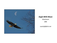 "Eagle With Moon • <a style=""font-size:0.8em;"" href=""https://www.flickr.com/photos/124378531@N04/45312920792/"" target=""_blank"">View on Flickr</a>"