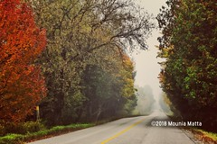 Somewhere in Autumn Ontario (Mad Mou) Tags: canon photography landscape overcast green yellow orange colors colour trees countryroad street ontario canada autumn fall