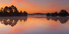 Sunrise in The Flaes (Wim Boon Fotografie) Tags: wimboon sunrise esbeek landgoedutrecht fog foggy autumn canoneos5dmarkiii canonef2470mmf28liiusm holland nederland netherlands nature autumn2018 herfst le leefilter leefilternd06hardgrad