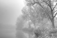 Nebel Unterer See (photon_de) Tags: dusk mist morning light lake long exposure fog black white bw atmosphere tree trees böblingen see nebel blackandwhite water nature park