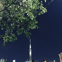 'the Tokyo Sky Tree today' #tokyo #skytree #東京 #スカイツリー #japan #beautiful #tower #photo #ソラ #空 #sumida #隅田川 #墨田区 https://ift.tt/1LMYntR #prayfortheworld (hary2961) Tags: ifttt instagram