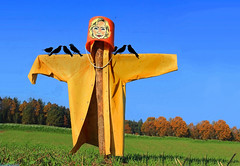 Hillary tries to be a scarecrow (Hakon07) Tags: hillaryscarecrow politics hillaryclinton corruption halloween autumn flied birds