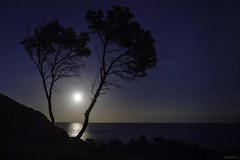 chanda mama (*BegoñaCL) Tags: moon horizon night tree see mediterráneo sky blue shadow begoñacl water landscape
