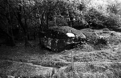 Glendalough (lilly.la.roux) Tags: analogue analog analoguephotography analogic nikon nikonf70 lomography lomo lomographyladygrey400iso glendalough blackandwhite bw nature stkevin trees tree woods countryside medieval medival site lake upperlake branches trekking medievalsite ireland cemetery medievalcemetery stonehouses flowers
