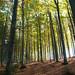 Schwarzwaldlichter