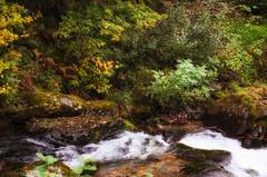 Watersmeet (C.G.Photos) Tags: nationaltrust vacation nationalpark england exmoor