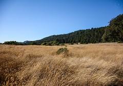 A Beautiful Field.. (LauraJSwindle) Tags: ca westcoast northerncalifornia california nikond7100 pacificcoast trees nature landscape field grass wantaghfairfield nyca usa