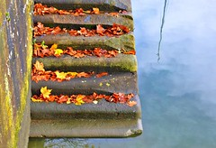 Autumn steps at Preston Docks (Tony Worrall) Tags: prestondocks preston place northwest north english autumn fall lancashire lancs leaf leaves marina prestonmarina city season seasonal fallenleaves buy sell sale bought stock item image photos prestonphotos ilobsterit nstagram visit area steps stairs climb stone colour color autumncolour uk britain shapes picturesofpreston