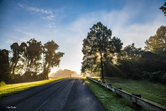 Shouldn't be day off. (Igor Danilov Philadelphia) Tags: sun mist beams ray blinding filling repletion obscures tree road way golden light