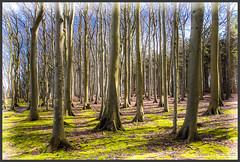 Bäume (Schnitzel_bank) Tags: nonnevitz mecklenburgvorpommern landscape landschaft canon eos eos60d nature vignette bunt farbig colorful tree baum