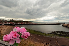 Whitby Harbour (Mike.Dales) Tags: whitby harbour piers riveresk northsea northyorkshire england flowers flora