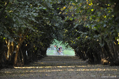 Dorris Ranch (JSB PHOTOGRAPHS) Tags: jsb939900001 dorrisranch bike leaves springfield nikon d3