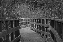 Chemin (Yves.Henchoz) Tags: nikond5 tamron150600 nature suisse switzerland swiss svizzera s noiretblanc blackwhite