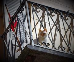 Guardare lontano (ornella sartore) Tags: gatto balcone luce ombra particolari allaperto