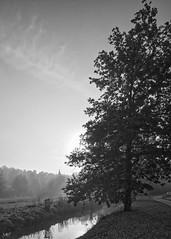 brume & Vaucouleurs à Septeuil DXOFP Ilford HP5 400 L1000922 (mich53 - thank you for your comments and 5M view) Tags: brume morning matinbrumeux arbres river riverside clocher leicamtype240 superelmarm21mmf34asph rangefinder entfernungsmesser télémètre paysage landscape leverdesoleil clairobscur septeuil chêne sunlight contrejour village noirblanc monochrome blackwhite 4autumn