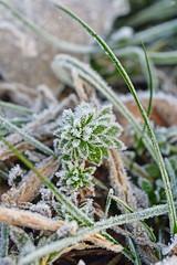 53858845 (aniaerm) Tags: snow ice frost