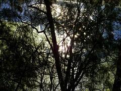 Forest and stream VI (elphweb) Tags: hdr highdynamicrange nsw australia forest bush tree trees wood woods spottedgum spottedgums spottedgumtrees waterway water stream creek weed algae