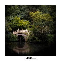 over the bridge... (mmsig) Tags: 2017 ausflug dusiburg zoo brücke bogenbrücke chinesischer garten ruhe frieden stilleben grün teich reflexion bridge arch chinese garden calm peace still life green pond reflection wuhan china canon