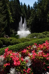 Fountain and Flowers (armct) Tags: butchart gardens rossfountain fountain victoria canada british columbia bc portrait depthoffield water lake pond hedge pathway forest fir pine nikon d810 28300mm national historic site composition