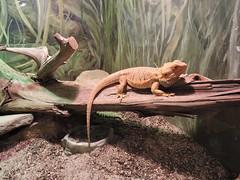 DSCN2481 (littlereview) Tags: carolinas littlereview 2018 travel museum animal zoo aquarium blog