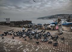 woman feeding pigeons (cengiz ulutas) Tags: sea pigeon birds badweather panasonic panasonicg80 panasoniclumixg80 lumix lumixphotography microfourthirds mft bursa turkey woman seaside clouds winter streetphotography