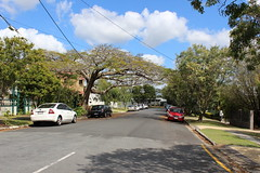 Norman Street in Wooloowin, Brisbane (philip.mallis) Tags: brisbane wooloowin street suburb suburbia